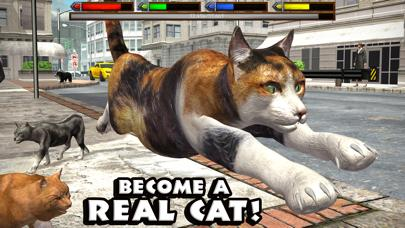 Ultimate Cat Simulator