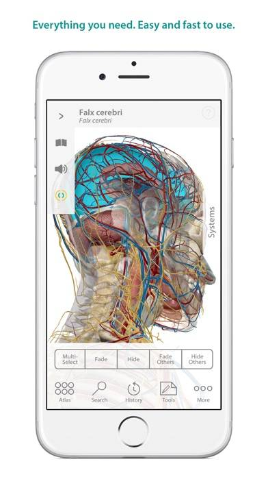 Human Anatomy Atlas – 3D Anatomical Model of the