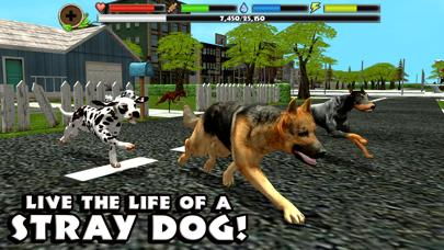 Stray Dog Simulator