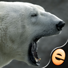 Jigsaw Wonder Polar Bears for Kids Icon