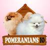 Pomeranians IO Icon