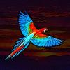 Birdistry