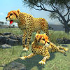 Clan Of Cheetahs