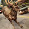 Deer Simulator 2016 Pro Now Available On The App Store