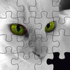 Super Cute Kitty Cat Puzzle Pro