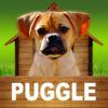 Puggle  opoly