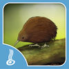 Puzzle Game He Kīrehe Māori / Native Animals Now Available On The App Store
