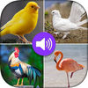 Birds Sounds and Photo Now Available On The App Store
