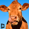 Euro Farm Simulator Livestock