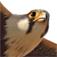 iBird Pro Guide to Birds Icon