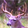 Deer Calls & Sounds icon