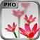 iQuikDoF Pro  Depth of Field Creator