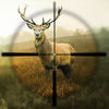 Hunting Simulator Icon