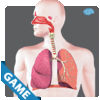 Respiratory Anatomy Game Review iOS