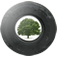 Trees for Cars image