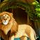 Lion Reign Mahjong Icon