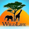 Wild Life IO Icon