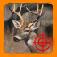 White Tail Deer Hunt