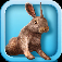 Bunny Simulator Icon