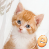 Jigsaw Wonder Kittens Puzzles for Kids Icon