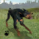 Dog Survival Simulator Icon